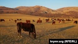 Крестьянское хозяйство в Крыму, иллюстративное фото