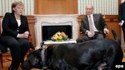 Канцлер Германии Ангела Меркель на переговорах с президентом Владимиром Путиным, во время которых в помещение вошла собака Путина - лабрадор Кони. Сочи, 21 января 2007 года.