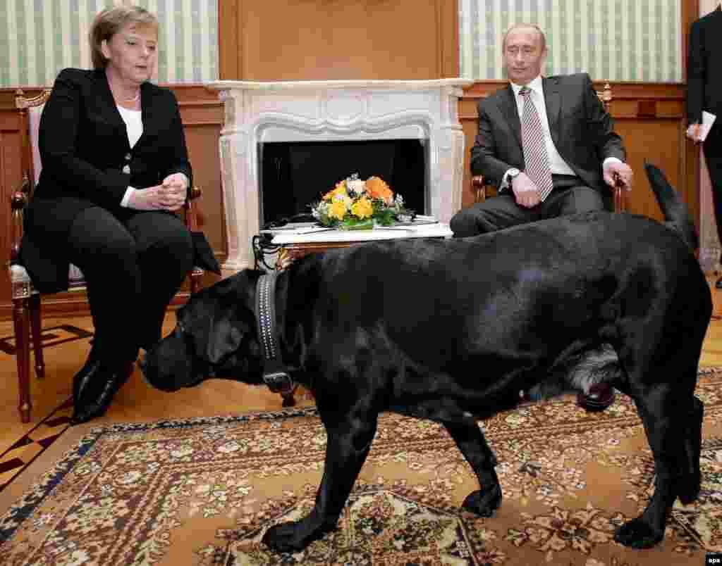 Любимая собака Владимира Путина, лабрадор Кони, в кадр попадала часто, даже когда речь шла о встречах президента с лидерами других стран. Январь 2007 года, беседа Путина с канцлером Германии Ангелой Меркель.