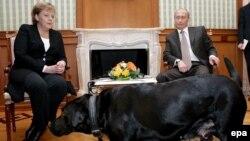 Встреча в Сочи: с лабрадором Кони Путину и Меркель не страшна никакая Белоруссия