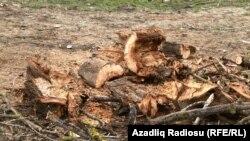 Kəndlərdə evləri bu cür odunla qızdırırlar.
