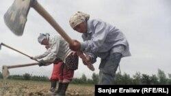 Жалал-Абадда талаада иштеген өзбек аялдар.