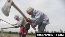Жалал-Абадда талаада иштеген өзбек аялдар. 2012-жыл, май айы.