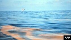 Последствия аварии в Мексиканском заливе