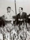 Nicolae Ceauşescu în mijlocul unui lan de grâu pe ogoarele de la Moara Vlăsiei. (27 iunie 1971) Sursa: Fototeca online a comunismului românesc; cota:6/1971