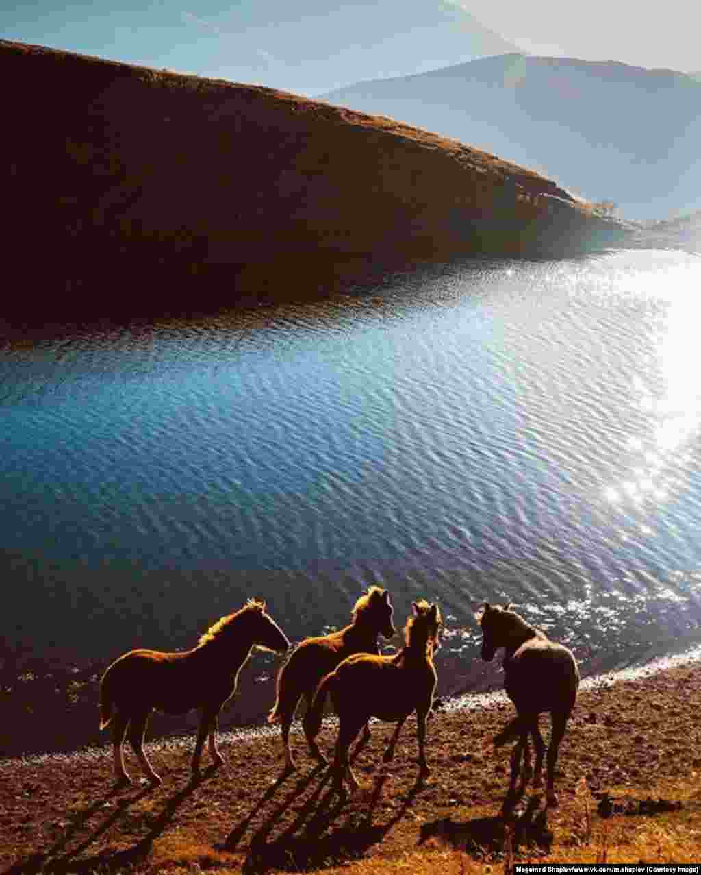 "This image of wild horses is one of Shapiev's most popular images on Instagram. ""It was taken near the border with Georgia. We had to ask the border guards' permission to go down there,"" he says. ""It was bright sunlight and the wind was playing on the water. Then I saw these horses."""