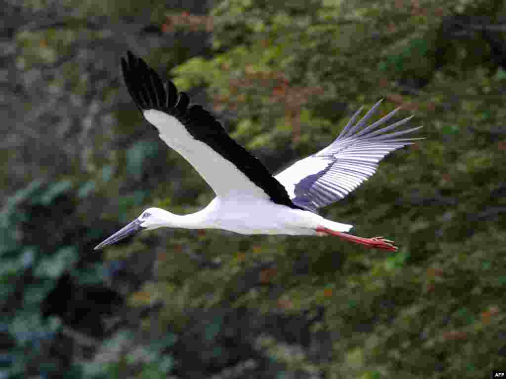 "A stork flies over a wildlife refuge in Japan (AFP). - Plan B devotes $31 billion to protect remaining global biodiversity. The World Parks Congress estimates this funding would suffice to manage and protect existing designated parks and refuges. It would also include funding to protect additional biologically diverse hotspots. ""Many will ask, Can the world afford these investments? But the only appropriate question is, Can the world afford the consequence of not making these investments?"""