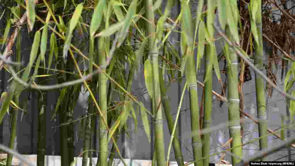 Микроклимат в балке своеобразный. Благодаря этому здесь растет бамбук и другие нетипичные для этой местности растения. Этому способствуют также многочисленные родники, которые насыщают влагой землю