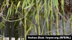 На одном из участков растет бамбук