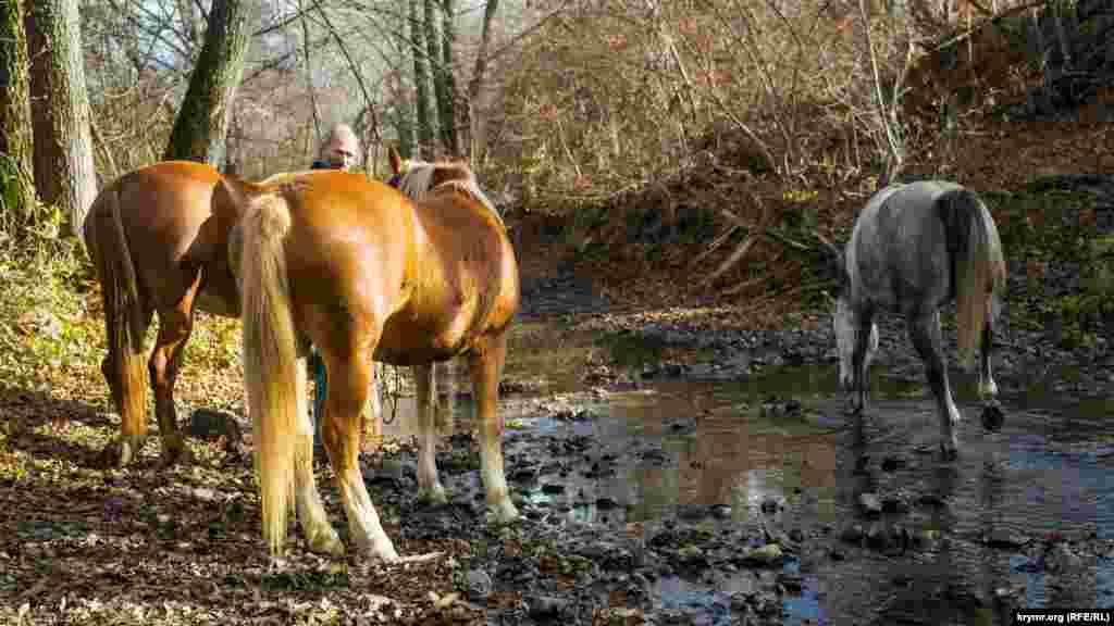 Владимир Гринев вывел своих коней на водопой на Качу. Воды для животных пока в реке хватает