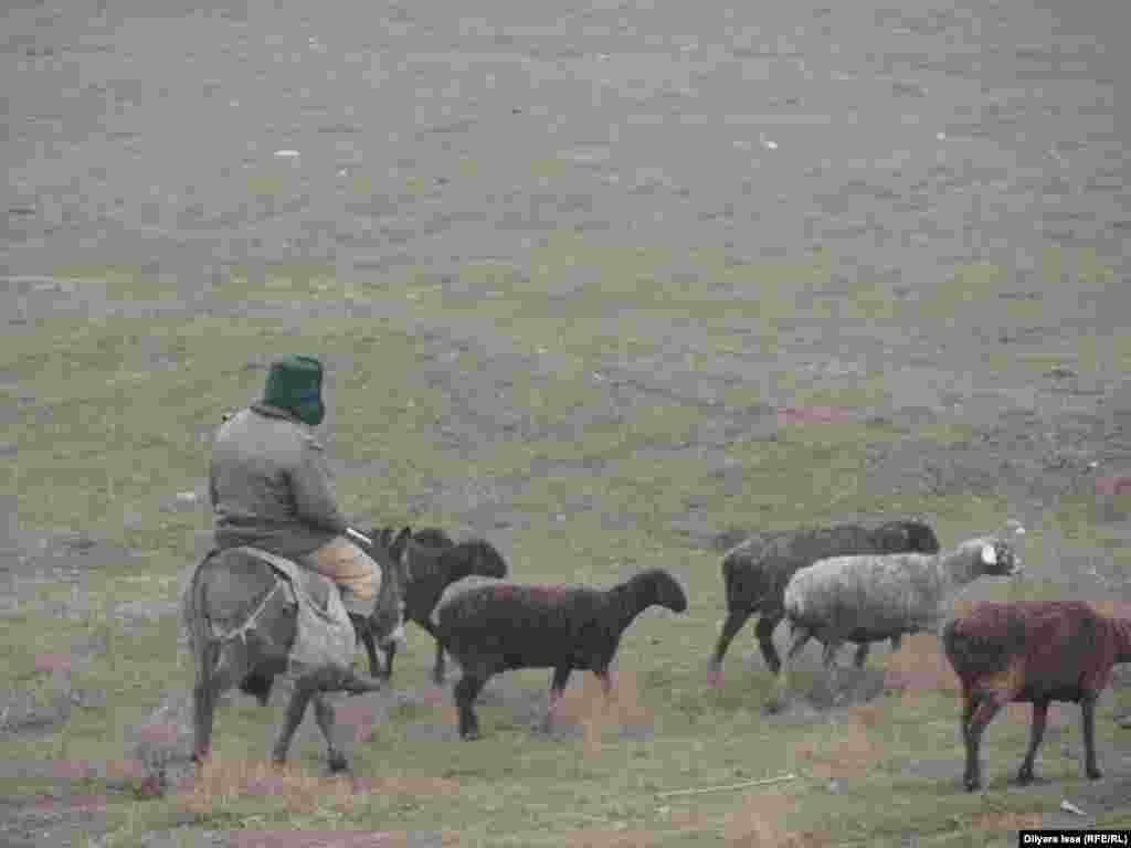 Жителям села Багыс выделили земли под посевы и пастбищные угодья в соседнем Казыгуртском районе. Пользоваться землями близ села они пока не могут - 550 гектаров земли не введены в оборот тоже из-за затянувшейся ратификации.