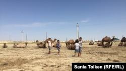 Дети и верблюды на окраине села Аккудык. Мангистауская область, 10 сентября 2017 года.