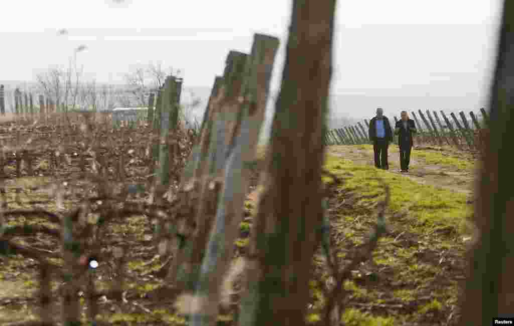 Men walk along the Tomai vineyard located near Comrat, the administrative center of the autonomous Moldovan province Gagauzia, which has been given an exclusive reprieve to Russia's ban on Moldovan wine after a local referendum chose closer ties to Moscow over the EU. (Reuters/Viktor Dimitrov)