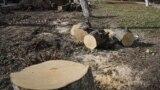 უკრაინაში უკანონო ხეტყის მჭრელების ძებნა