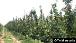 Сообщается, что Ислам Каримов встретится в Каршкадарьинской области с владельцами фермерских хозяйств, специализирующихсяна выращивании и продаже фруктов и овощей.