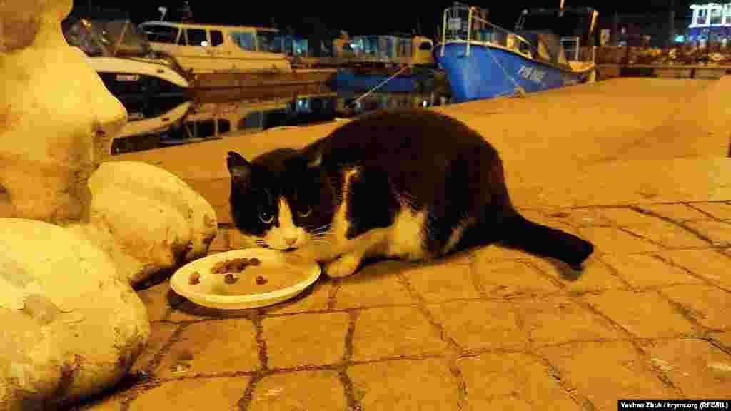 Ужин сурового балаклавского кота