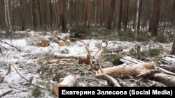 Вырубка леса (иллюстративное фото)