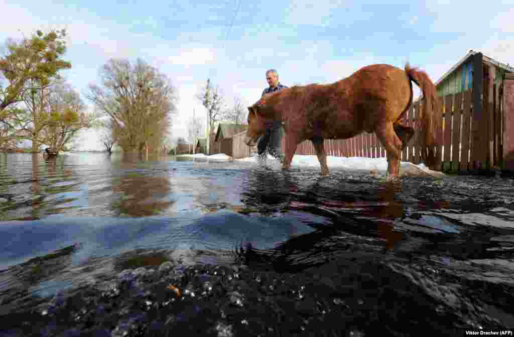 A man leads his horse through spring flooding in the Belarusian village of Snyadin, 300 kilometers south of Minsk. (AFP/Viktor Drachev)