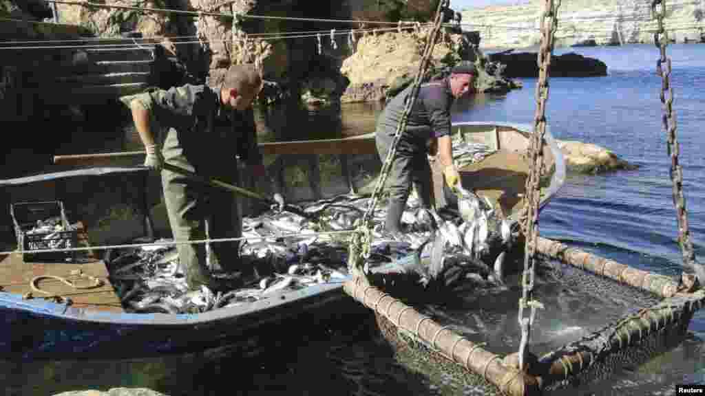 Сотрудники рыбной фермы ловят кефаль в водах Черного моря на мысе Тарханкут, 3 октября 2017 года
