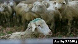 """""""Корбаннарыбызны Кырымда чалыйк"""" кампаниясе башланды"""