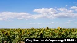 Крым, пос. Мирный