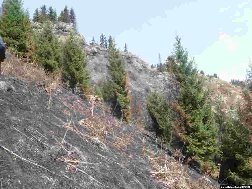 На Иссык-Куле сгорело 20 гектаров земли