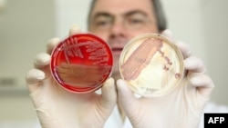The dramatic growth of antibiotic-resistant strains of bacteria has made it imperative to develop new therapies. (file photo)
