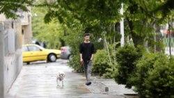 مقابله با سگها در ایران؛ ایدئولوژیک یا امنیتآفرین؟