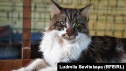 Благодаря новому закону о защите животных с передвижной выставки забрали истощенных кошек и котов