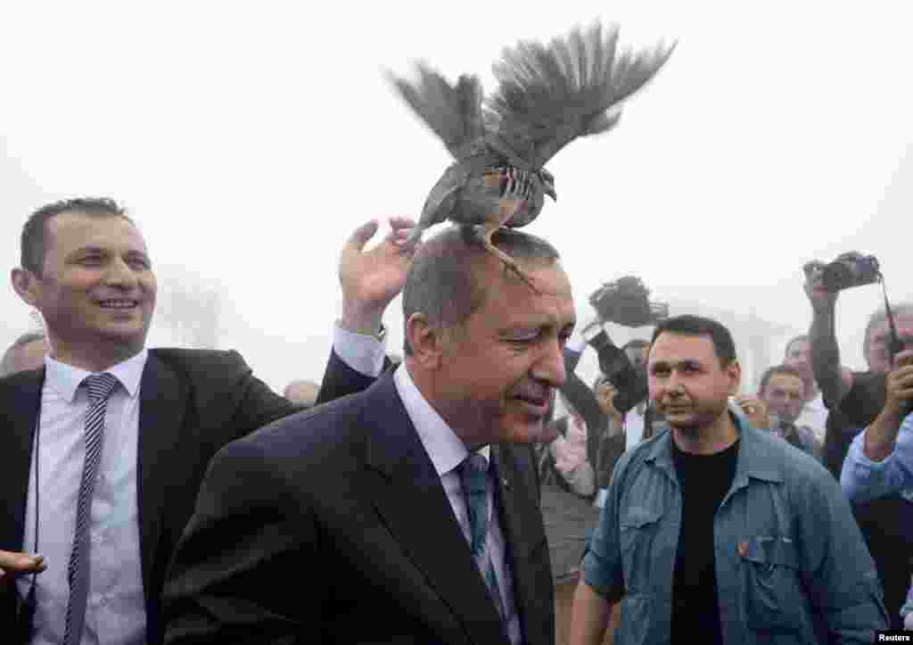 A grouse sits on the head of Turkish President Recep Tayyip Erdogan as he visits a facility of the Forest and Water Management Ministry in Rize, Turkey. (Reuters)