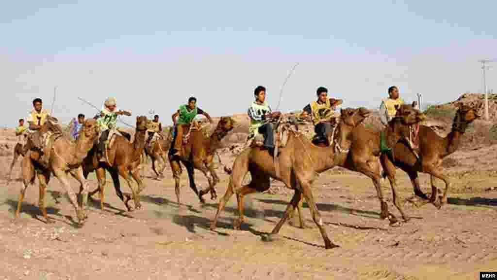 مسابقات شتر سواری در بندرعباس مرکز استان هرمزگان