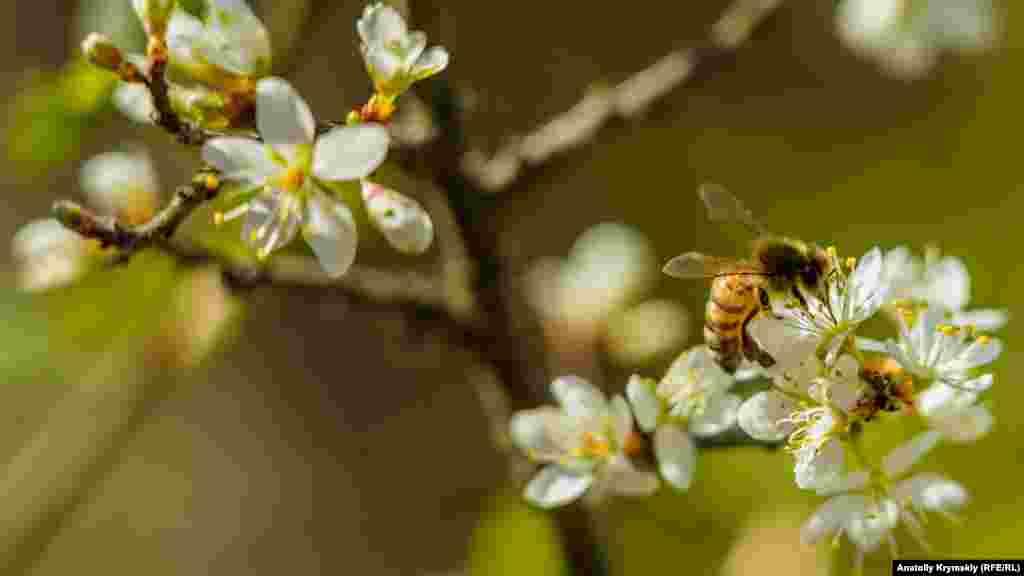 Над ними гудуть бджоли