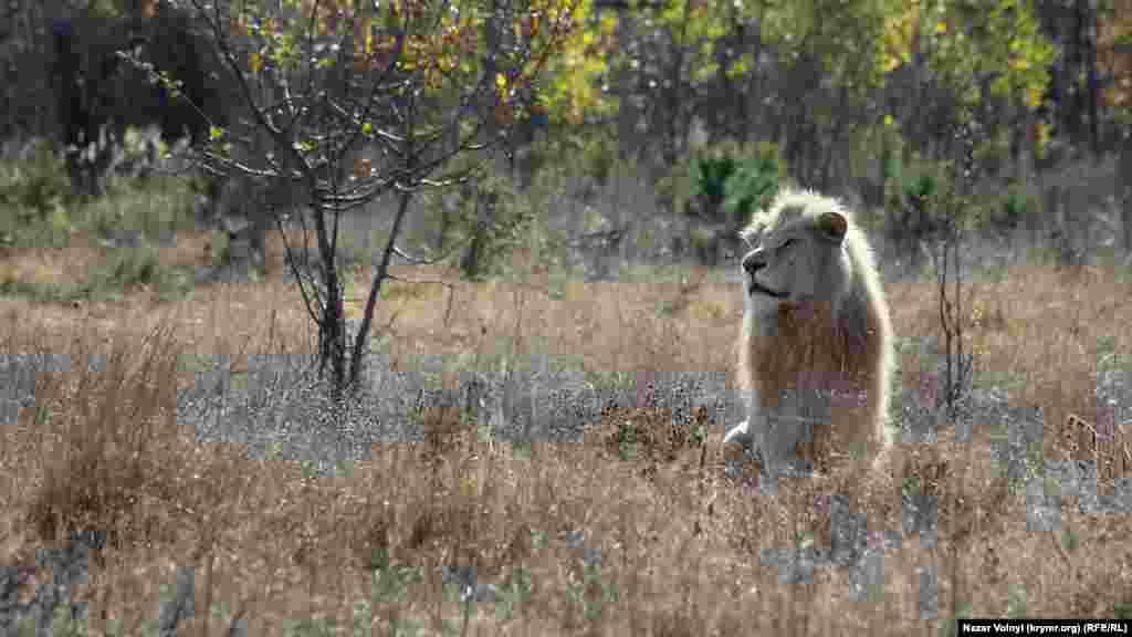 Парк займає площу у 32 гектари, з них приблизно 20 гектарів відведено під сафарі-парк саме для левів