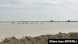 Затопленные территории в Мактааральском районе. 2 мая 2020 года.
