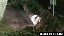 На днях в Самарканде сильный ветер повалил деревья.