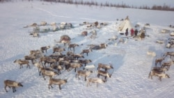 The Nomadic Nenets Of Russia
