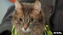 Кот по имени Батахан в суде, которого его хозяйка Мадина Смагулова привела в качестве потерпевшего. Семей, ноябрь 2009 года.