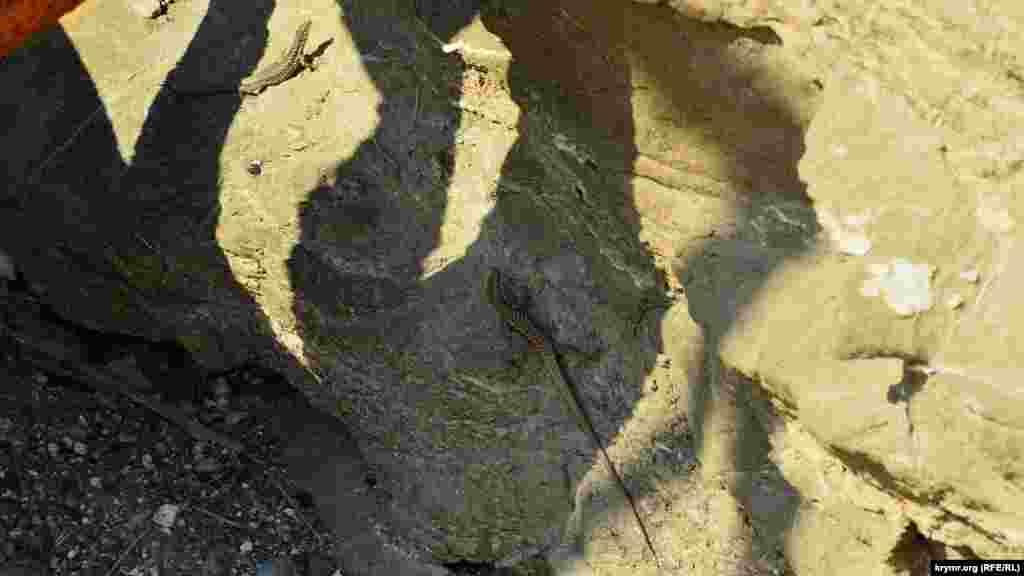 Гекконы вылезли погреться на солнышке