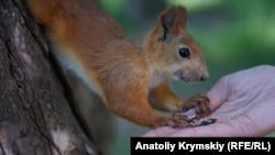 Завтрак на ладони: как симферопольцы подкармливают обитателей университетского ботсада (фотогалерея)