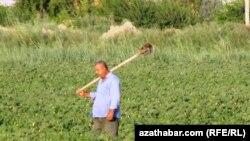 Фермер, Туркменистан