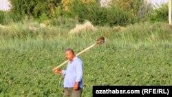 Türkmen daýhany