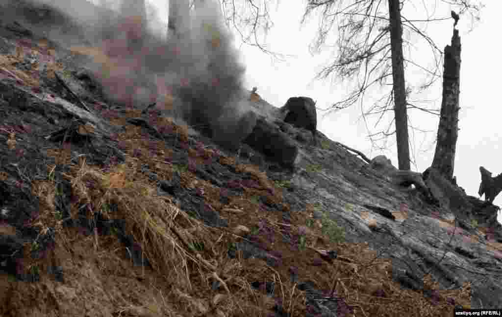Өрден төмен құлап бара жатқан бөрене. Іле Алатау ұлттық қорығы, 7 қыркүйек 2012 жыл.