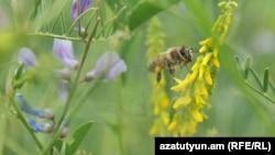 Пчела. Иллюстративное фото.