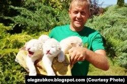 Олег Зубков и новорожденные львята Режиссер, Царь, Матильда и Няша