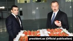 S.Qurbanov və İ.Əliyev «Baku Agropark» MMC-yə məxsus istixana kompleksində. 4 dekabr 2017