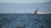 США передають Україні катери класу Island: усе, що треба знати