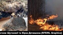 У результаті підпалів сухої трави, чагарників та листя страждають і тварини, і люди.