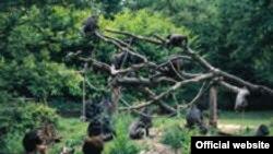 Обезьяний остров. Apenheul Primate Park.