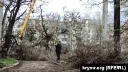 Обрезка деревьев в Керчи, 15 января 2019 года