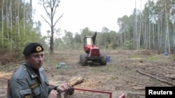 Pădurea Himki în curs de defrișare